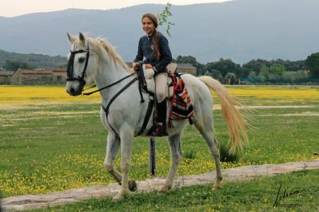 caballo la iglesuela