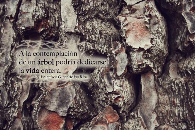 contemplación-árbol