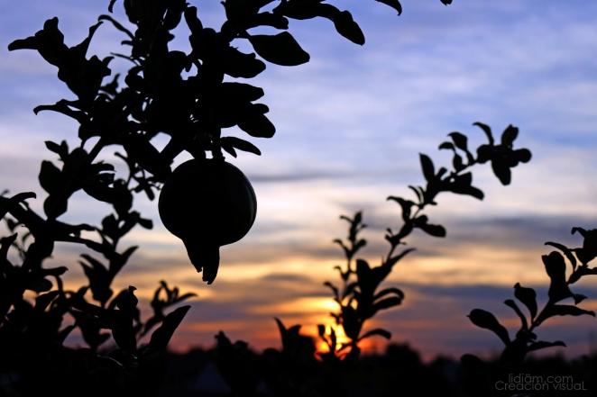 Lidia-Martinez-octubre-2018-01-fruto-y-horizonte